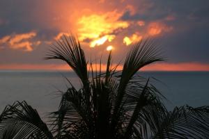 Photo (c) Steve Piscitelli (Negril, Jamaica)